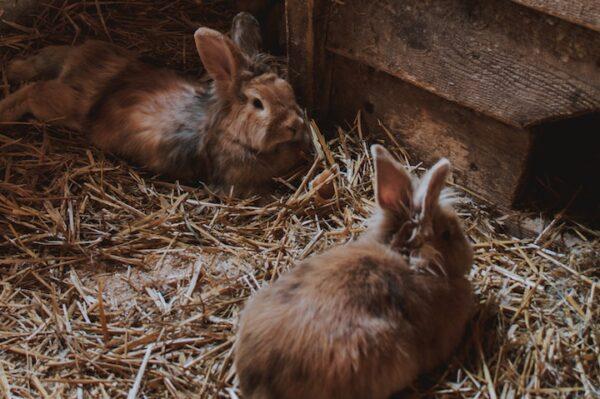 hø til din kanin