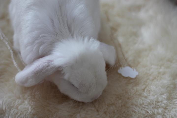 Kanin bur: Hvor stort? Guide til byg selv kaninbur