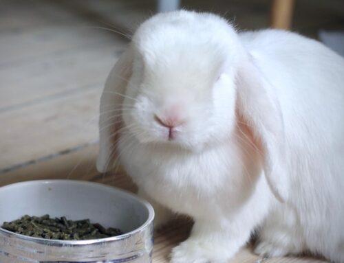 Kanin mad: Hvad må kaniner spise?