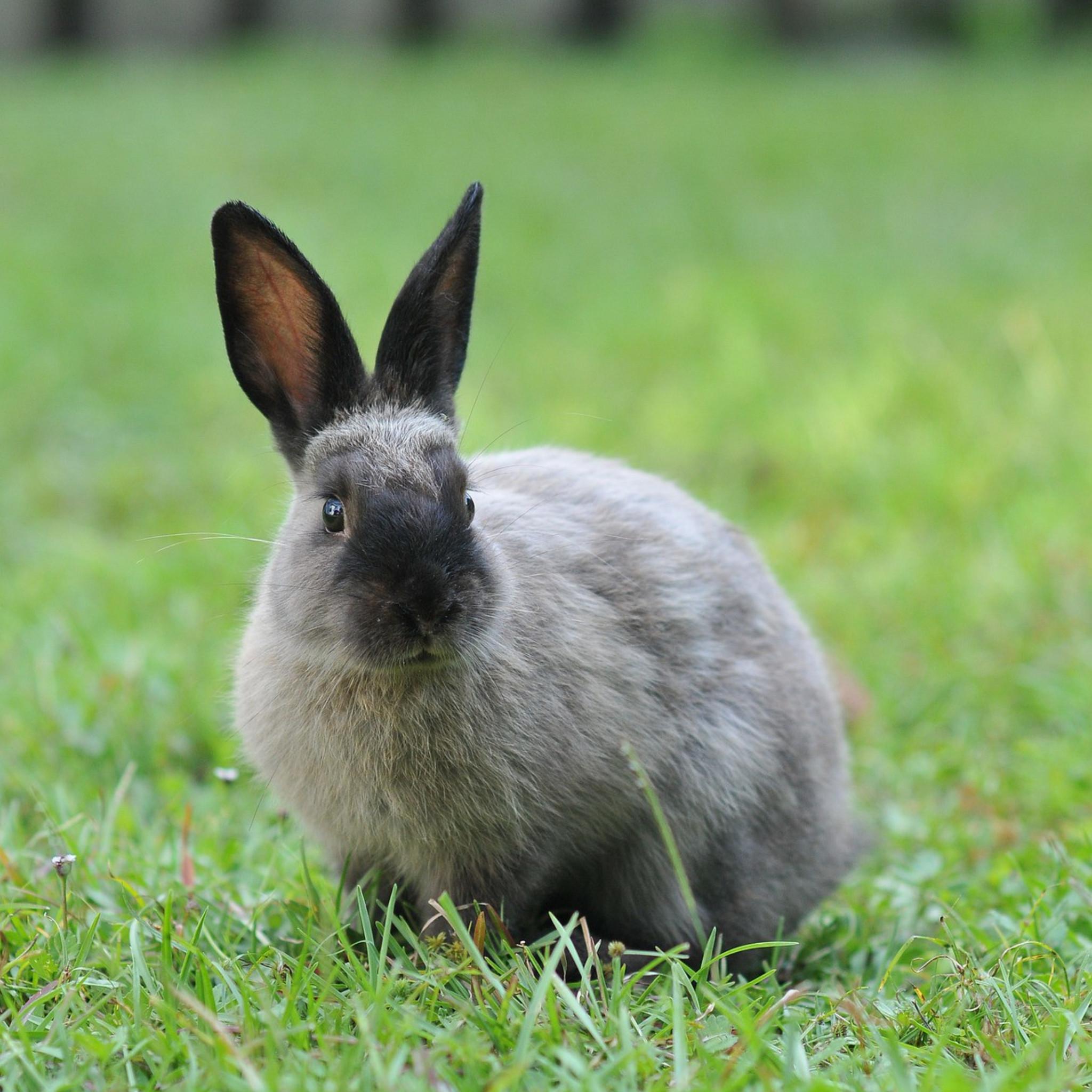 Kanin racer