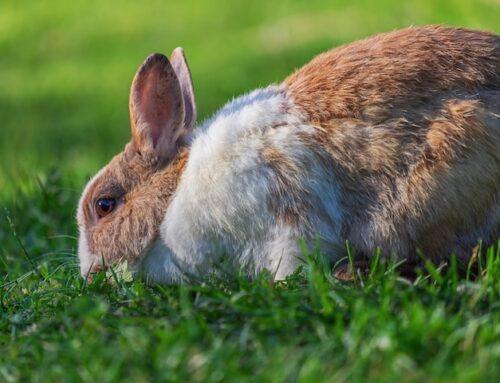 Bundstrøelse til kanin