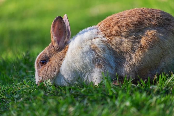 hvad må din kanin spise