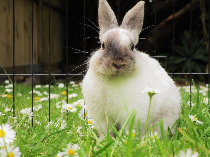 Kanin bider i tremmerne