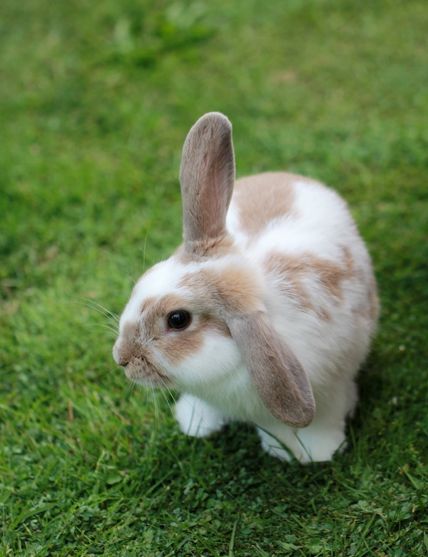 Hvordan får du kanin til at spise hø