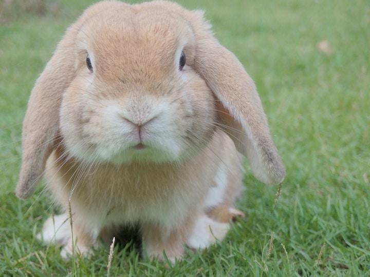 Navne til dyr og kaniner