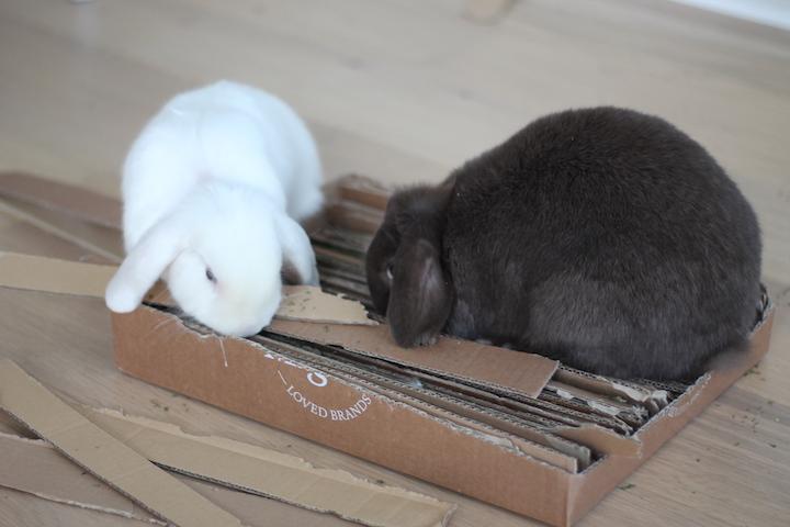 kaninlegetøj