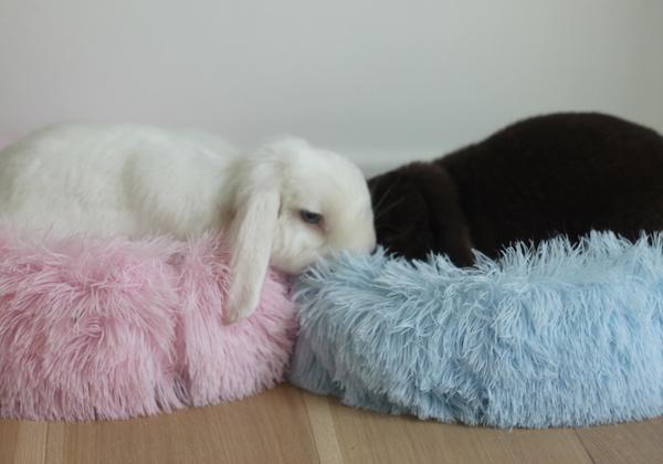 kaninseng i plys