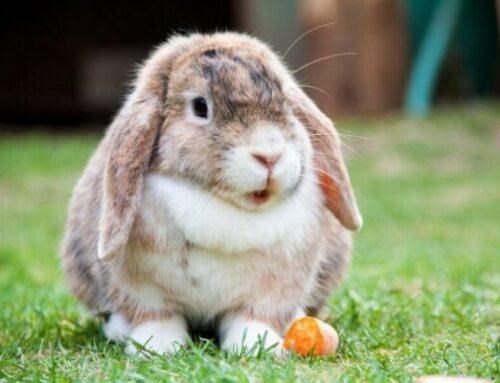 Kanin legetøj: Hvad findes der og hvordan aktiverer man sin kanin?