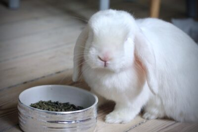foder og pellets til kanin