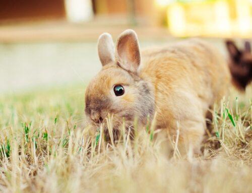 Kanin legetøj: Lav det selv