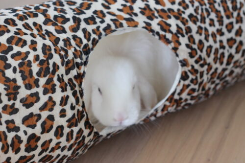 leopard tunnel kanin