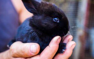 hvor køber man en kanin