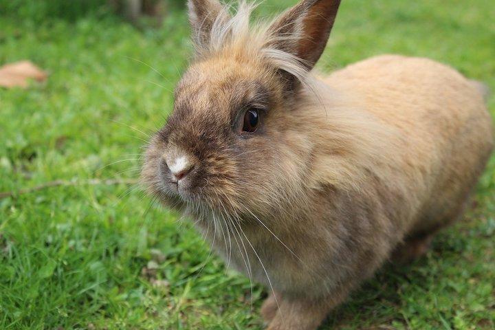 hvordan løfter man en kanin