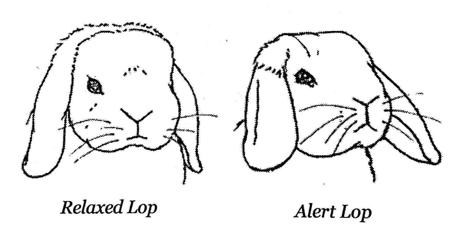 kanin kropssprog