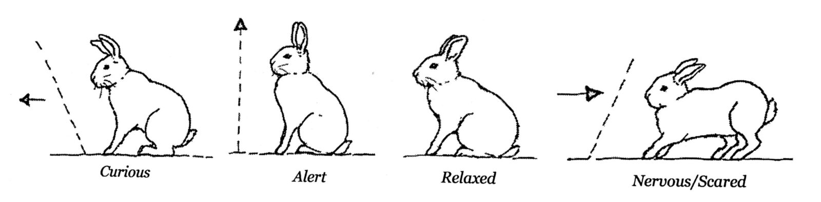 kanin kropssprog2