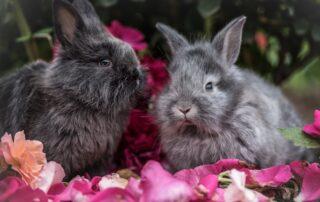 kaniner og frugt