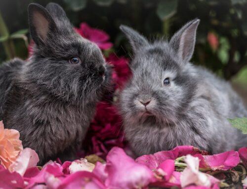 Frugt til kaniner