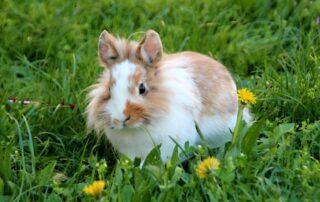 kaniner og grene