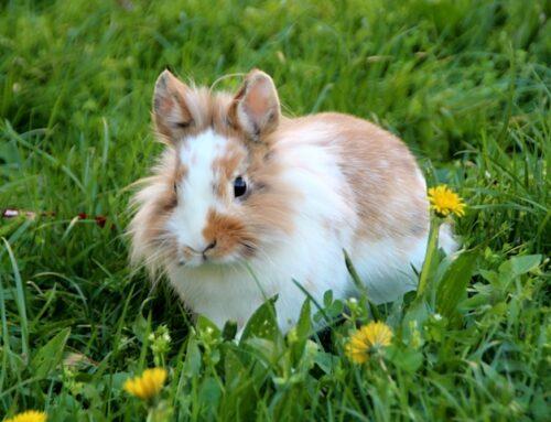 Grene til kaniner