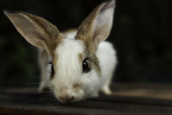 pris neutralisering kanin